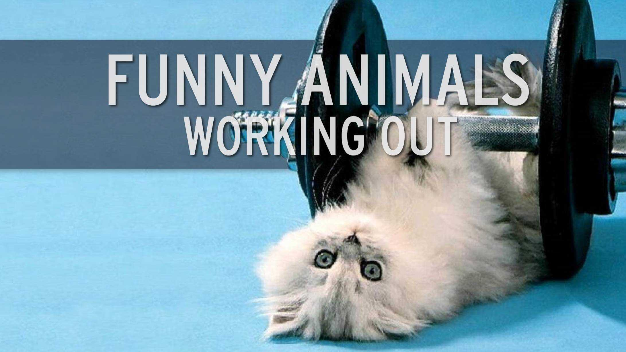 Funny: animalutele fac fitness